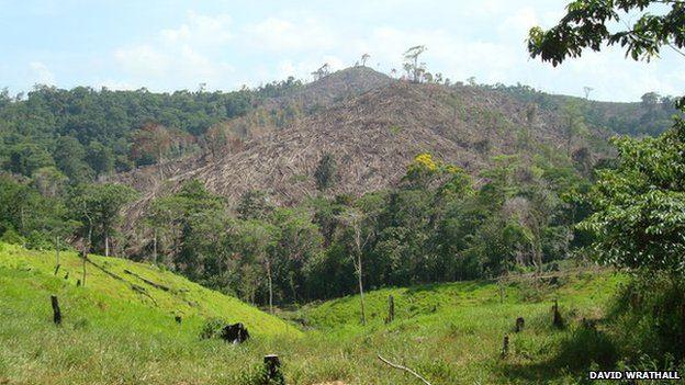 Deforested Region
