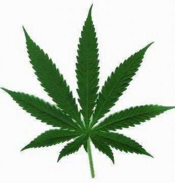 Wpid Weed Leaf