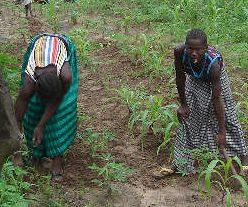Wpid Women Farming