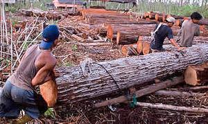 Loggingindonesia