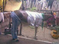 Wpid Donkey