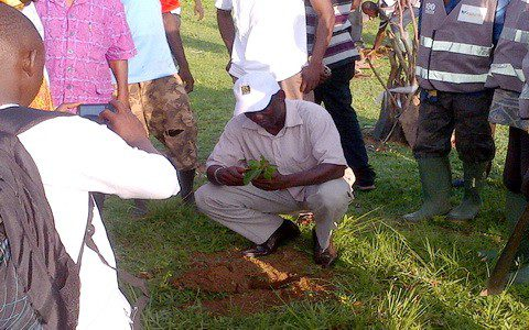 afforestation contract