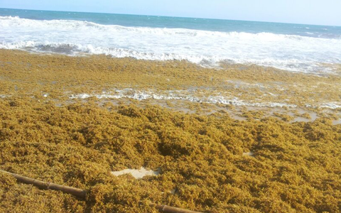 Fishermen along the coast also say the brownish substances are impeding fishing activities.