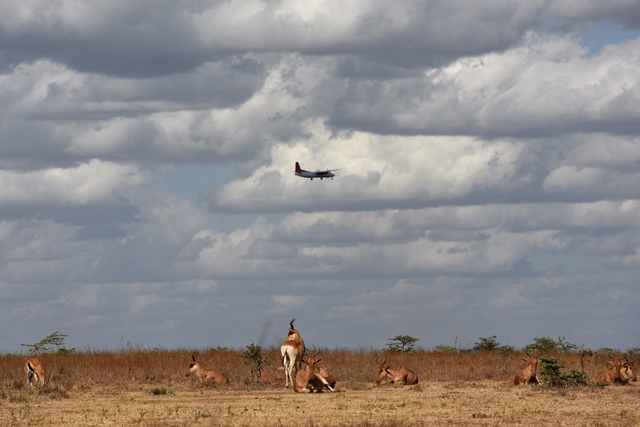 """A plane flies over a herd of antelopes at Kenya's Nairobi National Park in Nairobi, Kenya, March 21, 2015. Kenya's """"long rains"""" season which usually begins in March is unpunctual this year, making both the people and wild animals of this country longing for the coming rains. (Xinhua/Sun Ruibo)"""