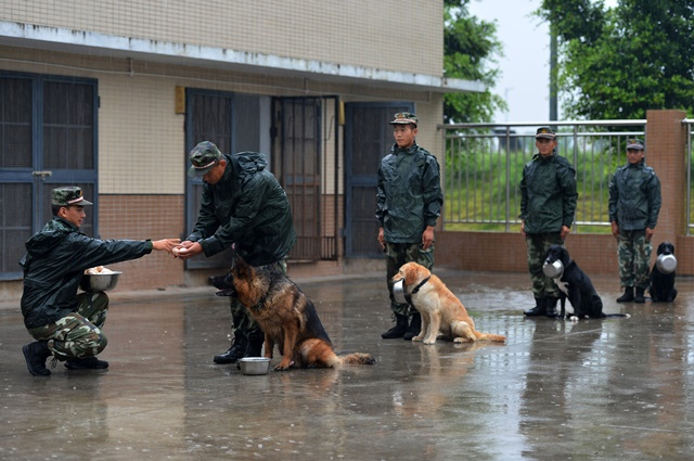 Police dogs wait for eating food under guidance of dog handlers of the 7th detachment of the Armed Police Corps in Chongqing, southwest China, July 15, 2015. (Xinhua/Zhang Chunhua) (lfj)