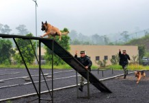 Police dogs receive a training in a drill under guidance of dog handlers of the 7th detachment of the Armed Police Corps in Chongqing, southwest China, July 15, 2015. (Xinhua/Zhang Chunhua) (lfj)
