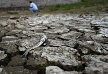 Photo taken on July 21, 2015 shows exposed riverbed in Shanzuizi Village of northeast China's Liaoning Province. The lingering drought in Liaoning has resulted in about 178,200 people lack of drinking water and has affected about 1.15 million hectares of crops. (Xinhua/Li Gang)