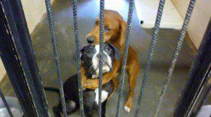 wpid-hugging-dogs.jpg