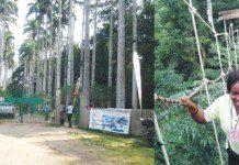 Canopy walkway at Bunso Arboretum