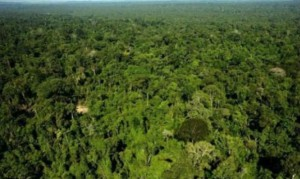 wpid-Aerial-view-of-the-Amazonic-forest-reserve-AFP0.jpg