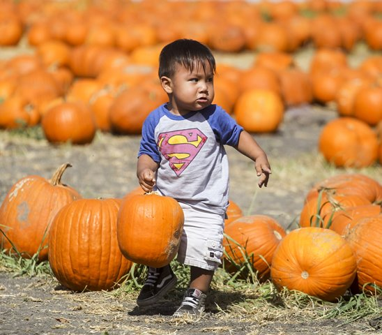 A boy carries his selected pumpkin for the upcoming Halloween at a pumpkin patch in Cal Poly Pomona, the United States, Oct. 24, 2015. (Xinhua/Zhao Hanrong)(zcc)