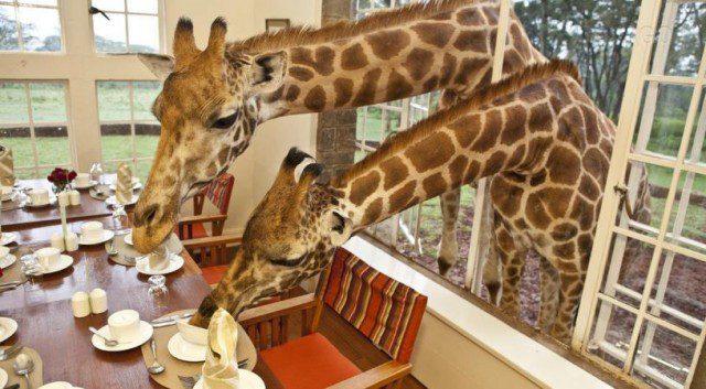 image by Giraffe Manor