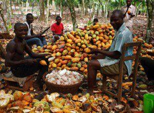 wpid-Cocoa-farmers-pix.jpg