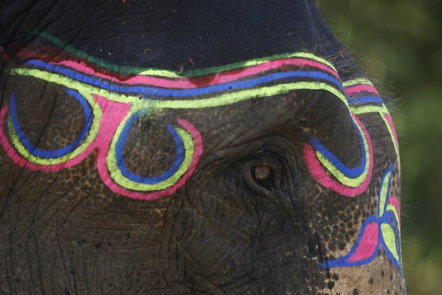 An elephant is decorated to take part in the 12th Elephant Festival in Chitwan, Nepal, Dec. 26, 2015. A total of 127 elephants participated in the 12th Elephant Festival organized by Regional Hotel Association of Chitwan. (Xinhua/Pratap Thapa)