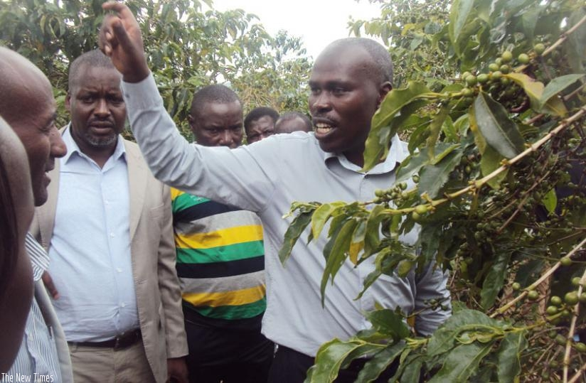 Joseph Bigirimana, the lead researcher for the team that developed the variety, explains the benefits of the new RABC15 coffee variety in Huye District. (Emmanuel Ntirenganya)
