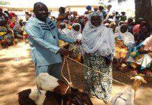The DCE of Karaga, Mr. Imoro Yakubu presenting the animals to a beneficiary woman at Karaga