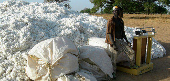GMO Bt Cotton