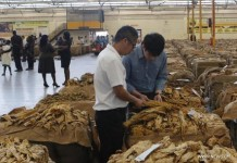 HARARE, March 30, 2016 (Xinhua) -- Traders inspect the packed tobacco leaves as the 2016 sale season begins at the Tobacco Sales Floor in Harare, Zimbabwe, March 30, 2016. The output of tobacco, Zimbabwe's top export earner, is expected to fall by 15 percent to 160 million kg in 2016 after an El-Nino induced drought that has left up to four million people in need of food aid, officials estimate. (Xinhua/Stringer)