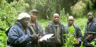 Gorilla Census