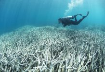 The World Heritage-listed reef is currently suffering its worst bleaching in recorded history with 93 percent of corals affected due to warming sea temperatures. (AFP Photo/STR)
