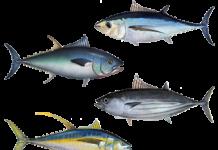Tuna_assortment