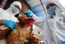 H7N9 epidemic