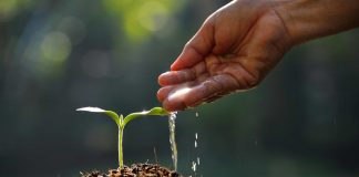 letting seed grow