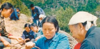 Shen Jilan participates in the forestation campaign in September, 1981 at Xigou Village in Shanxi province. (File photo)