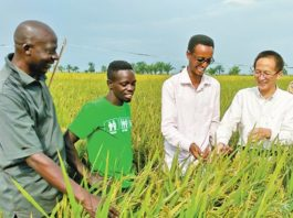 A Chinese agricultural expert passes on farming technologies to farmers in Burundi, in an aid-Burundi demonstration rice field. (Photo provided by aid-Burundi agricultural expert)
