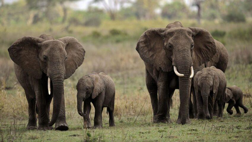 Elephants kill farmer, destroy crops in southern Tanzania