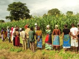 A group of farmers in Sawla