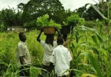 Agricultural Extension Agents
