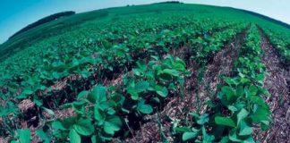 Agro ecological farming