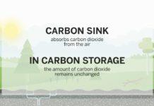 carbon sink