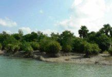 Trees Along Dakah River