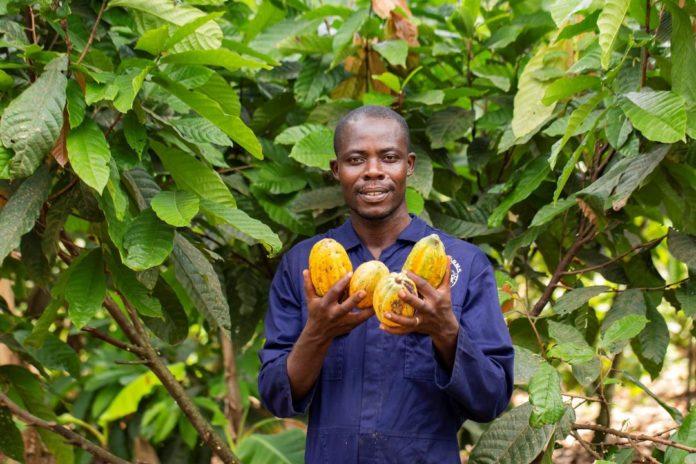 Cocoa Farmer