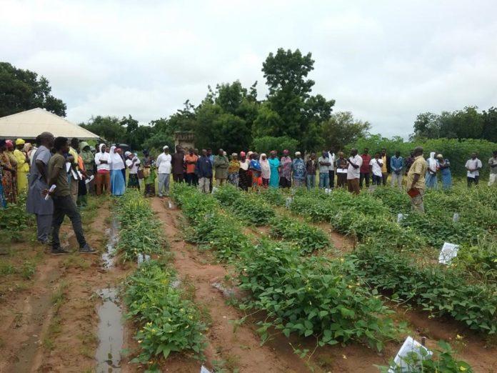 Cowpea Farmers