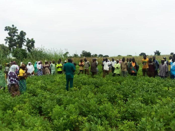 Farmers Groundnut