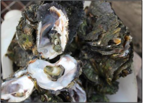Ocean Acidity Pollution