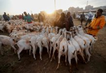 Muslim faithful buy goats at a livestock market during celebrations marking the Muslim holiday of Eid al-Adha amid the spread of the coronavirus disease (COVID-19) in Nairobi, Kenya July 31, 2020. REUTERS/Thomas Mukoya TPX IMAGES OF THE DAY