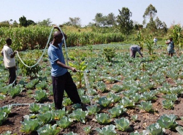 Vegetable Farmers