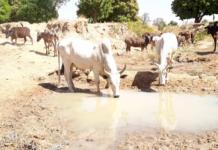 Social Farmers Dam