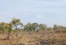 Pictures of the burnt cashew plantation at Tanchara Koro