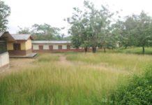 Reopening Schools Weeds