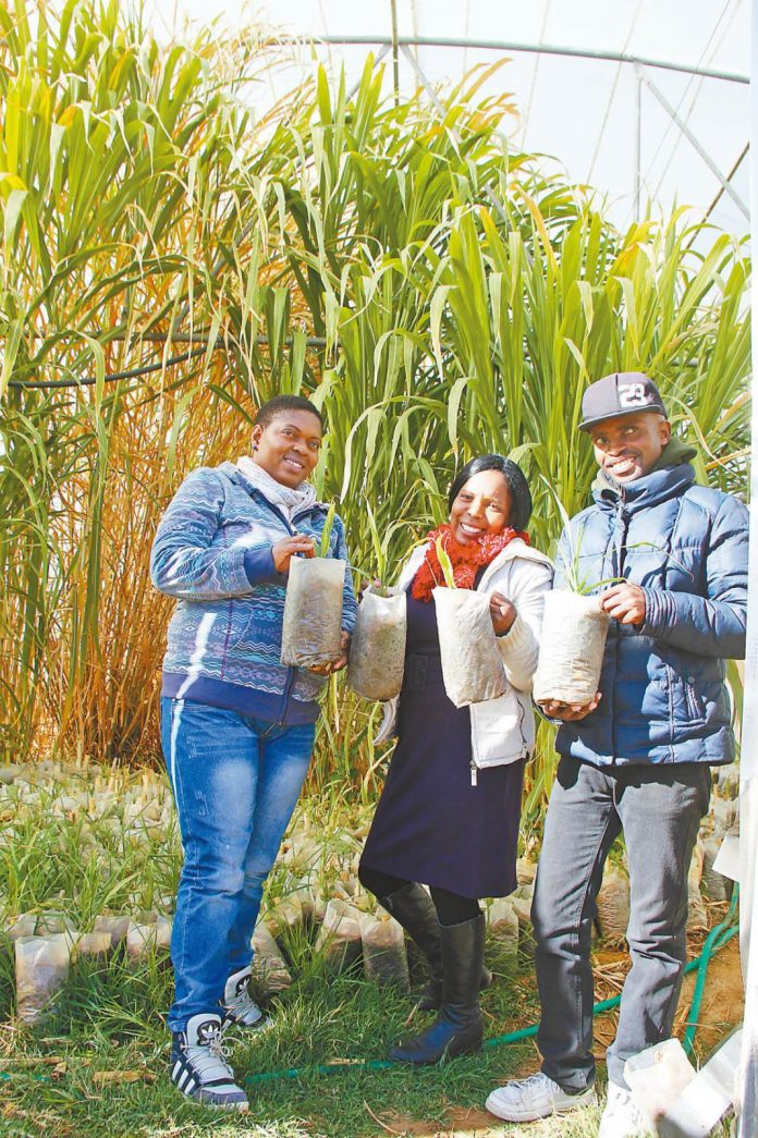 Farmers learning to grow oyster mushrooms pose for a picture in front of a Juncao greenhouse in the suburb of Maseru, capital of Lesotho. (Photo by Wan Yu/People's Daily)