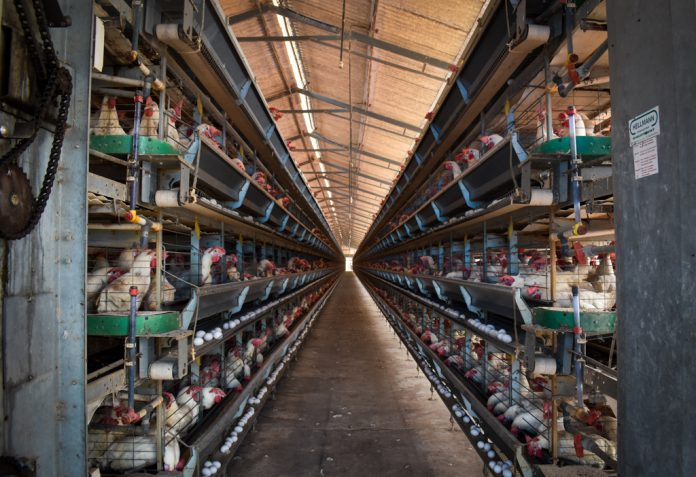 battery cage systems