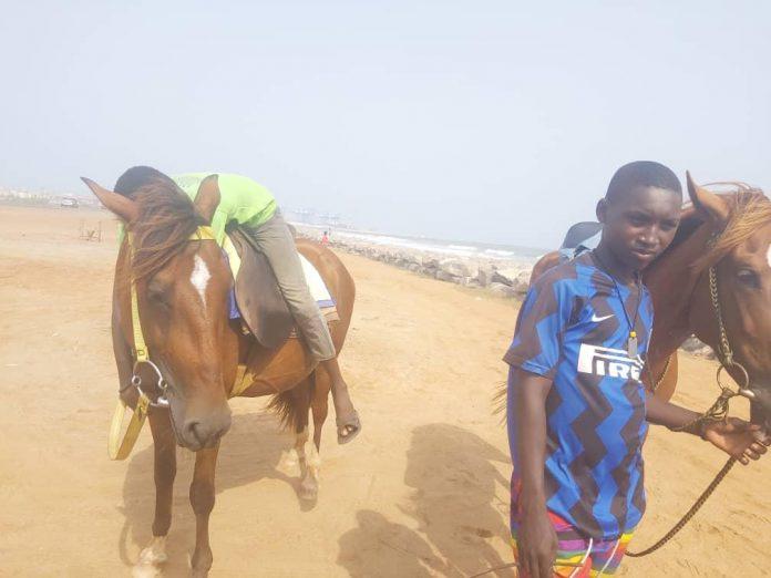 beach horse riding business