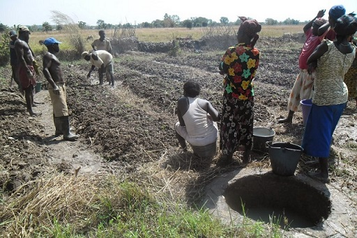Farming -Dry season