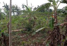 Cocoa Farms Rehabilitation