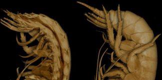 CT image looking inside a shrimp.
